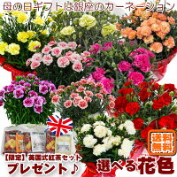 母の日ギフト早割銀座のカーネーション5号鉢母の日限定フラワーギフト2017花鉢Mother's_Day送料無料smtb-s母の日ギフトは銀座東京フラワー