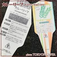 カレーリーフ苗3号ポット【2つセット】ミカン科ナンヨウザンショウ送料別