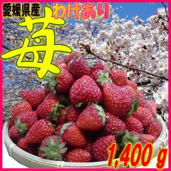 【格安・バラ売り】訳ありイチゴ(ジャム用 いちご・苺 約1.4kg)