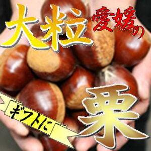 全国3位の産地!えひめのほっこほこ栗【愛媛県大洲産】生栗(大粒) 1kg