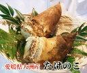 【送料無料】愛媛県大洲市産 旬を先取り!朝採れたけのこ 2kg(2〜4本(目安)入り)[米ぬか付き・筍・竹の子]