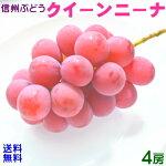 【送料無料】信州の美味しいぶどう約1.5kg(3房)