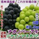 長野県内でのみでしか作られない皮ごと食べられる新品種!出荷日の朝摘みでお届け致します(日...