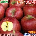 【予約】【送料無料】長野県産 サンつがる Cランク(家庭用)約5kg(14-18玉)訳あり(キズ、色ムラなど)秋のりんごシーズン最初の品種!信州りんごは甘〜いよ♪