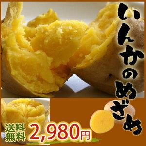 【送料無料】黄金のじゃがいもインカのめざめ44%オフ!濃厚な味、さつまいも?栗みたい!自然...