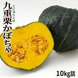 かぼちゃ 九重栗 10kg詰 [4玉〜8玉入]北海道 富良野産 送料無料★メロン農家が作る、栗みたいな カボチャ♪