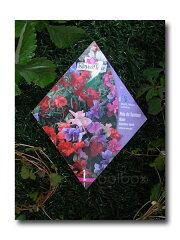 【Royalfleur】スィートピー「Cupidon MIX」