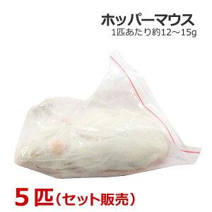 冷凍 ホッパーマウス 5匹