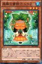 トレカ魂で買える「森羅の蜜柑子 シトラ (遊戯王)(ノーマル)(エクストラパック ナイツ・オブ・オーダー)」の画像です。価格は35円になります。