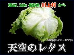 【販売開始】【レタス4個】川上村 天空のレタス 4個