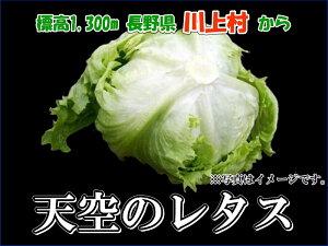 【販売開始】【レタス6個】川上村 天空のレタス 6個
