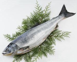 [北海道産]天然新巻鮭【約2.5kg】