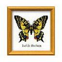 RIOLISクロスステッチ刺繍キット HB-096 「Swallowtail Butterfl...