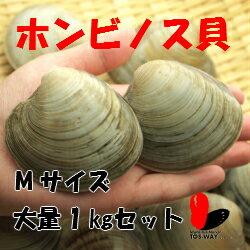 ホンビノス貝 1キロMサイズ(約11〜14粒)【酒蒸し】【バーベキュー/パーティー】