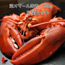 【活】活オマール海老 500g 5尾セット