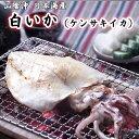 白いか(ケンサキイカ)100g 干物(単品) 山陰沖日本海産(鳥取県・島根県産)