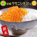 ■新米■令和2年産 宮城県産 ササニシキ 30kg 【米】 ...
