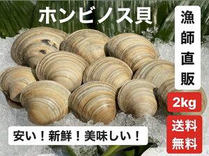 2kg【送料無料】漁師直送!だから新鮮!どこよりも安い!千葉県産 活ホンビノス貝  ふっくらと肉厚でおいしいダシがたっぷり!バーベキューに!酒蒸しに!