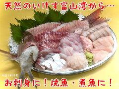 富山湾きときとセット鶴