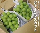 【国産】鳥取県産シャインマスカット【2房】