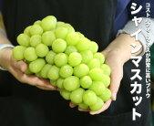 【国産】鳥取県産シャインマスカット【1kg以上1房】