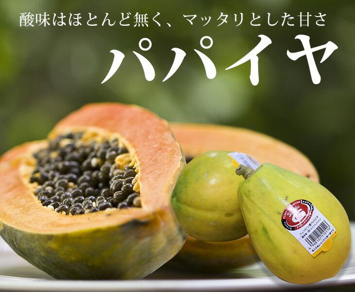 東洋フルーツ『フィリピン産パパイヤ1玉』