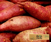 【熊本県産】べにはるか【約5kg】【熊本県産家庭用贈り物贈答お祝いお返し芋いもイモ野菜お歳暮】