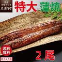 うなぎ蒲焼き 特大181-210g×2尾 約3.5人前 送料