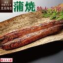 うなぎ蒲焼き 特大181-210g×2尾 約3.5人前 送料無料 国産 愛知県産