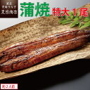 うなぎ 蒲焼き 特大181-210g×1尾 1.5-2人前 送料無料の品物と同梱