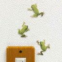 カエル グッズ 【FROGS!Color アマガエル】カラー ウォールステッカー カエル雑貨 爬虫類 インテリア かえるグッズ 壁 シール Wall Story