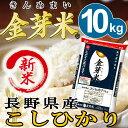 【新米】金芽米 長野こしひかり10kg【5kg×2袋・送料込...