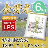金芽米特別栽培米【長野こしひかり】6kg【送料込み】【とがずに炊ける無洗米】【29年産】【LPSリポポリサッカライド豊富免疫力】きんめまい