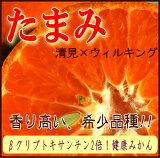 【送料無料】たまみ 5kgオレンジ系の爽やかな甘さ♪