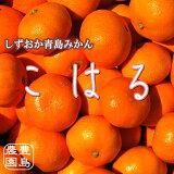 【送料無料】こはる(小玉青島みかん)5kg