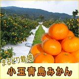【送料無料】【小玉】まるどり小玉青島みかん5kgちいさな果実に濃厚果汁♪