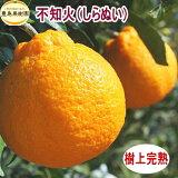 【送料無料】不知火(デコポン)【5kg】