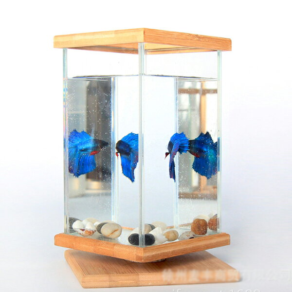 水槽アクアリウム金魚鉢卓上AQUARIUMすいそうおしゃれ小型水族館かわいいオブジェガラス四角長方形金魚メダカ熱帯魚(※中身は付