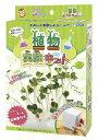 【実験】【知育玩具】☆たのしく実験しよう 植物の成長を観察し...