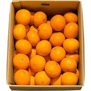 きよみ清見オレンジ
