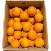 訳ありきよみ清見清見オレンジ