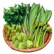 岩手山菜いわて山菜山の恵み