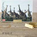 【ネコポス便送料無料】ブラス カードスタンド ワイド 幅広 カードホルダー セット(10個入) 2