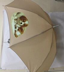 キャバリア柄のワンタッチ傘です(パピー)[トラストワンポイント]