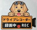 ドライブレコーダー録画中・犬種別外張りステッカー(ゴールデン...