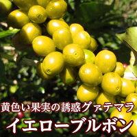 グァテマライエローブルボン200g/スペシャルティコーヒー/