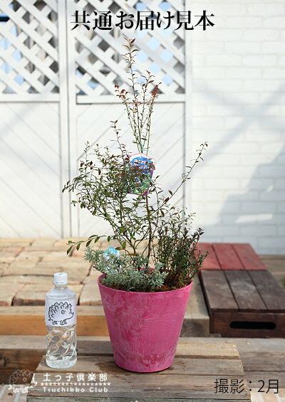 ビルベリーとクランベリーの寄せ植え(アートストーン22cm鉢植え)