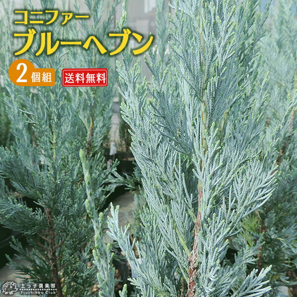 ガーデニング・農業, 植木  15cm 2