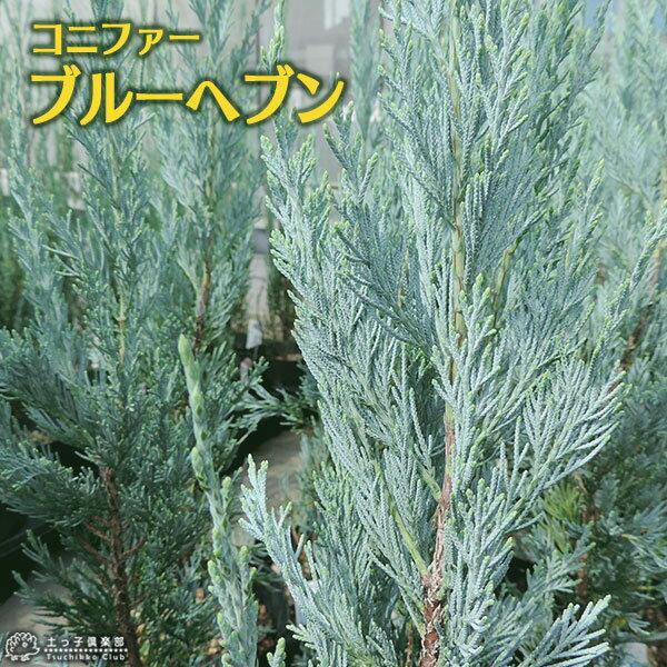 ガーデニング・農業, 植木  15cm