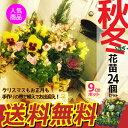 秋冬の花苗24個セット パンジー ビオラ 芝桜 ナデシコ 金